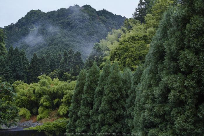 高野山,6月(SDIM0055,F5.6)2014yaotomi_.jpg
