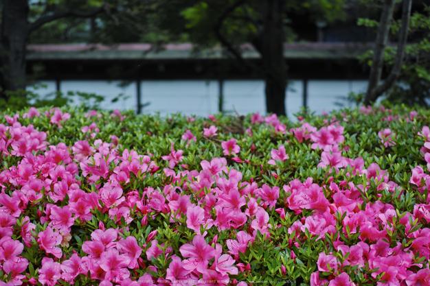 高野山,6月(SDIM0202,F2.8)2014yaotomi_.jpg
