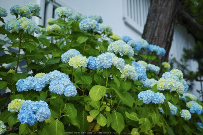 高野山,6月(SDIM0210,F2.8)2014yaotomi_.jpg