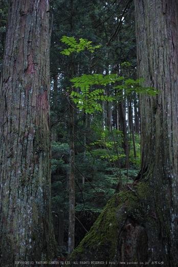 高野山,6月(SDIM0215,F2.8)2014yaotomi_.jpg