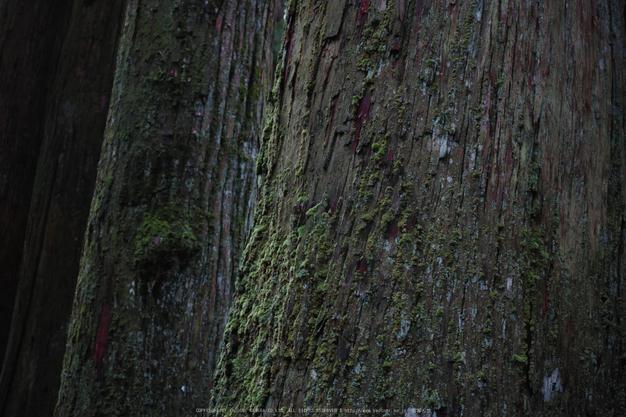 高野山,6月(SDIM0216,F2.8)2014yaotomi_.jpg