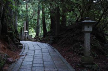 高野山,6月(SDIM0217,F2.8)2014yaotomi_.jpg