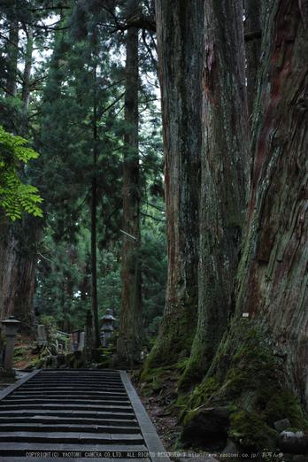 高野山,6月(SDIM0222,F2.8)2014yaotomi_.jpg