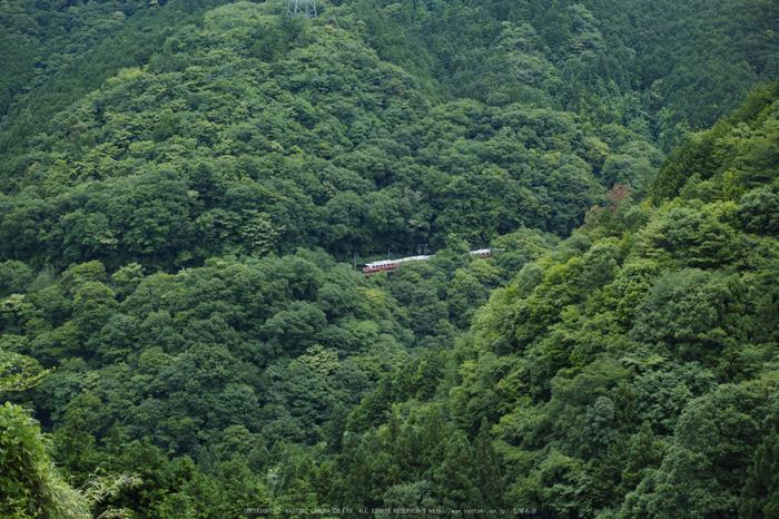 高野山,6月(SDIM0239,F3.5)2014yaotomi_.jpg
