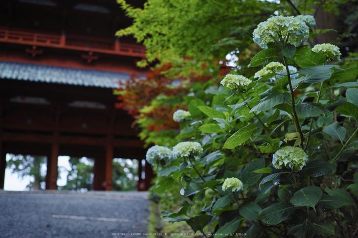 高野山.DP2,Quattro(SDIM0072,2.8)2014yaotomi_.jpg