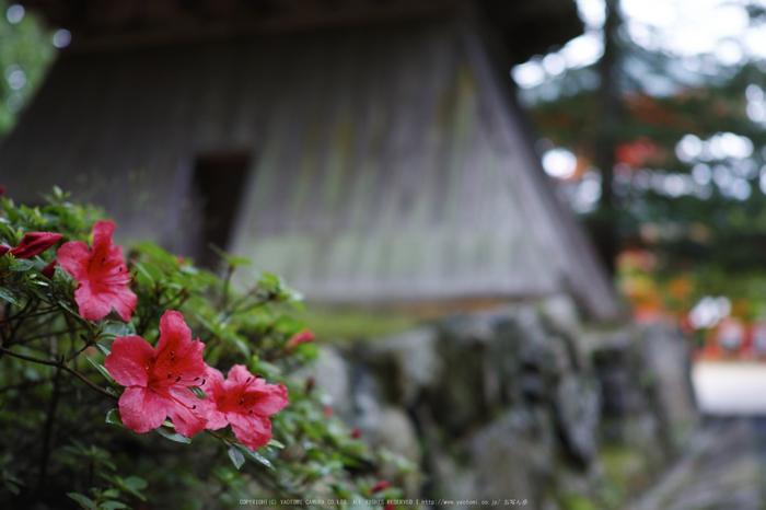高野山.DP2,Quattro(SDIM0113,2.8)2014yaotomi_.jpg