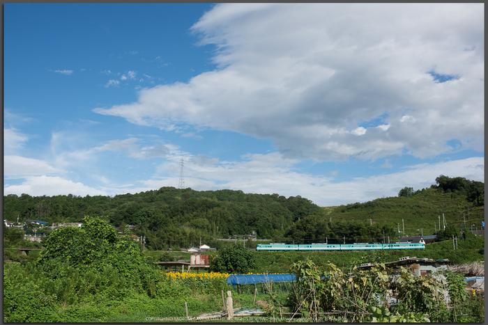五條,上野公園,ひまわり(DSC_1664,35mm,1-250sec(f10),D810)2014yaotomi_Top.jpg