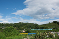五條,上野公園,ひまわり(DSC_1664,D810,FULL)2014yaotomi_.jpg