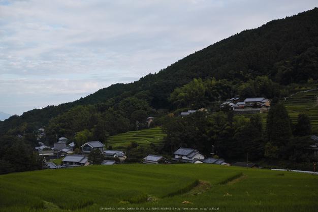 明日香,細川(SDIM0027_2,F3.5,dp2q)2014yaotomi_.jpg