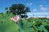 本薬師寺跡,ホテイアオイ(DSCF7108,29.3mm,f8,FULL)2014yaotomi_.jpg