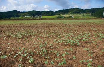 笠,蕎麦の花(DSCF7571,F6.4,18mm,XT1)2014yaotomi_.jpg