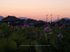藤原宮跡,はす(IMGP0219,,0.6 秒 (f - 8.0),645Z,FULL)2014yaotomi_.jpg
