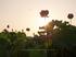 藤原宮跡,はす(IMGP0302,,1-500 秒 (f - 6.3),645Z,FULL)2014yaotomi_.jpg