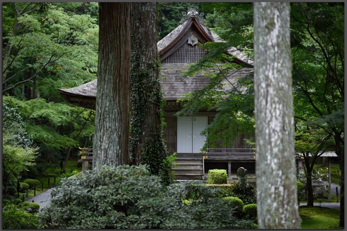 三千院,シュウカイドウ(DSC_0178)2014yaotomi_Top.jpg