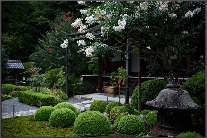 寂光院,シュウカイドウ(DSC_0280,D810)2014yaotomi_Top.jpg