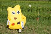 明日香,稲渕,案山子ロード(IMGP0074(RAW),36.9mm,F3.2,QS1)2014yaotomi_.jpg