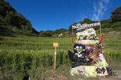 明日香,稲渕,案山子ロード(IMGP0116(RAW),3.8mm,F5,QS1)2014yaotomi_.jpg