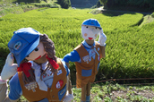 明日香,稲渕,案山子ロード(IMGP0121(RAW),3.8mm,F5.6,QS1)2014yaotomi_.jpg