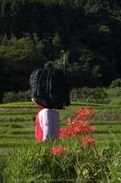 明日香,稲渕,案山子ロード(IMGP0180(RAW),24.8mm,F3.5,QS1)2014yaotomi_.jpg