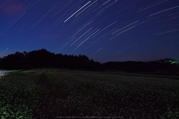 桜井,笠,そば畑(P9170006,12mm,F5,EM1)2014yaotomi_.jpg