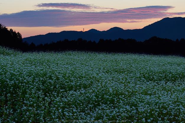 桜井,笠,そば畑(P9170051,55mm,F13,EM1)2014yaotomi_.jpg