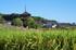 法起寺,コスモス(IMGP0481,62.5mm,F9,FULL)2014yaotomi_.jpg