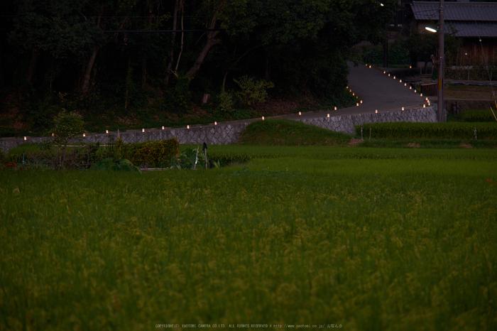 飛鳥光の回廊(DSCF7911,135mm,F5.6,iso200,XT1)2014yaotomi_.jpg
