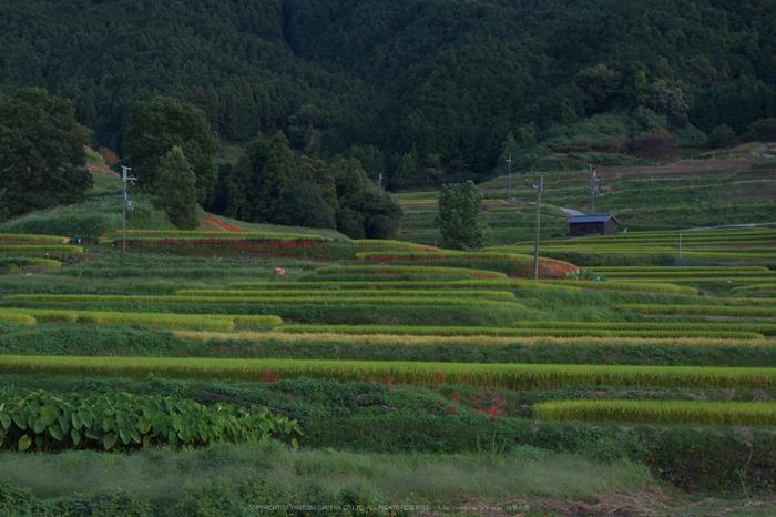 IMGP0147(55mm,F9,0,iso100,KS1)2014yaotomi_s.jpg