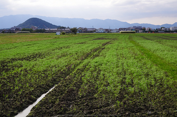 (PA150333,25mm,F6.3,EM1)2014yaotomi_.jpg