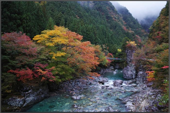 みたらい渓谷,紅葉(DP1Q0285,F10,dp1Q,Top)2014yaotomi_.jpg