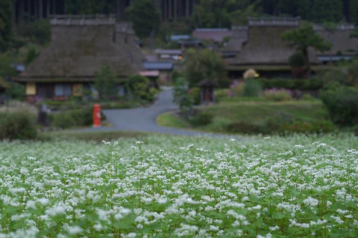 京都美山,かやぶきの里,そば(IMGP0899,50mm,F2.8,KS1)2014yaotomi_.jpg