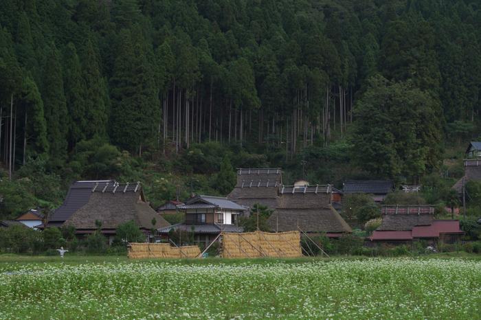 京都美山,かやぶきの里,そば(IMGP0917,62.5mm,F9,KS1)2014yaotomi_.jpg