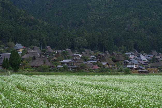 京都美山,かやぶきの里,そば(IMGP0954,50mm,F7.1,KS1)2014yaotomi_.jpg