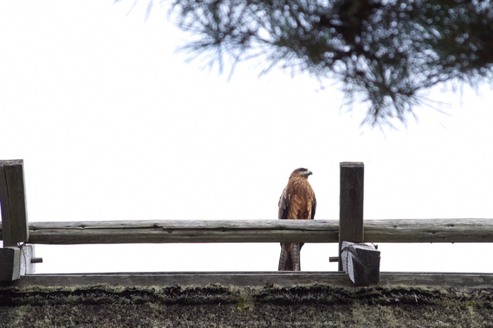 京都美山,かやぶきの里,そば(IMGP1145,135mm,F8,KS1)2014yaotomi_.jpg