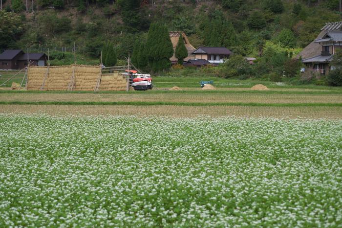 京都美山,かやぶきの里,そば(IMGP1169,50mm,F2.2,KS1)2014yaotomi_.jpg