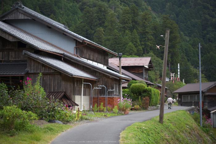 京都美山,かやぶきの里,コスモス(IMGP1007,50mm,F1.8,KS1)2014yaotomi_.jpg