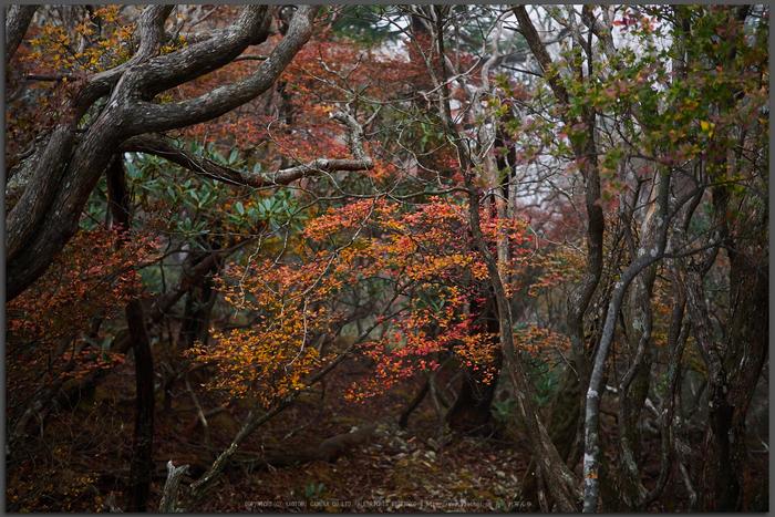 大台ヶ原,紅葉(2)(PA150173,Top)2014yaotomi_.jpg