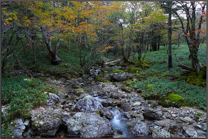 大台ヶ原,紅葉の始め(PA110020,Top)2014yaotomi_.jpg