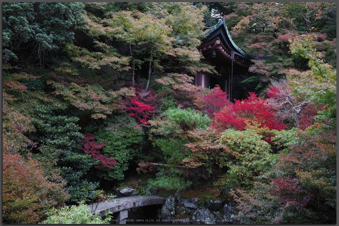 毘沙門堂,紅葉(DP1Q0149,F5,dp2Q,Top)2014yaotomi_.jpg