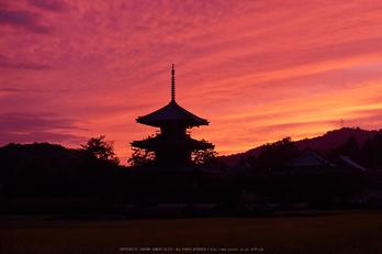 法起寺,コスモス,夕景(DSCF8355,55mm,F6.4,XT1)2014yaotomi_ (1) .jpg
