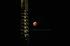皆既月食,奈良,興福寺(P1040798,FULL)2014yaotomi_.jpg
