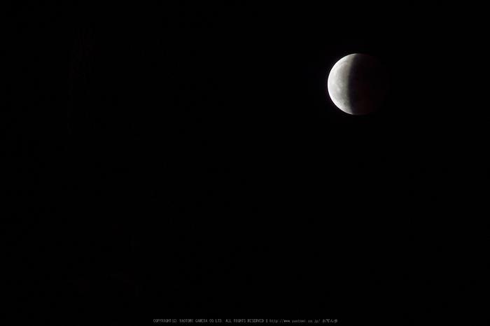 皆既月食,奈良,興福寺(PA080436,228mm,EM1)2014yaotomi_.jpg