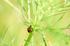 藤原宮跡,コスモス(PA080246,60mm,F3.5,EM1)2014yaotomi_ (1) .jpg