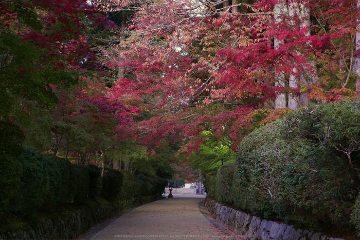 高野山,紅葉(P1000142,F5.6,34mm,LX100)2014yaotomi.jpg