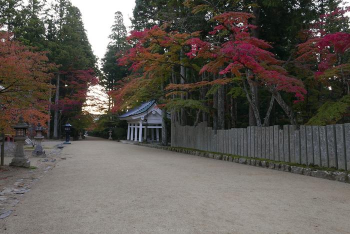 高野山,紅葉(P1000168,F6.3,13.9mm,LX100)2014yaotomi.jpg