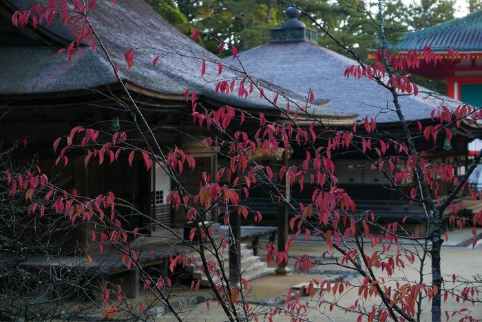 高野山,紅葉(P1000197,F2.8,34mm,LX100)2014yaotomi.jpg