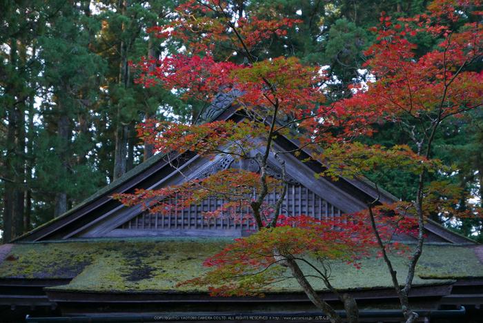 高野山,紅葉(P1000199,F2.8,34mm,LX100)2014yaotomi.jpg