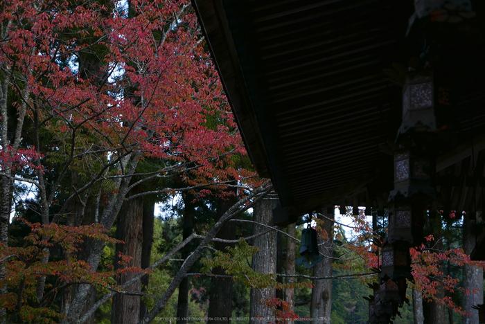 高野山,紅葉(P1000206,F2.8,34mm,LX100)2014yaotomi.jpg