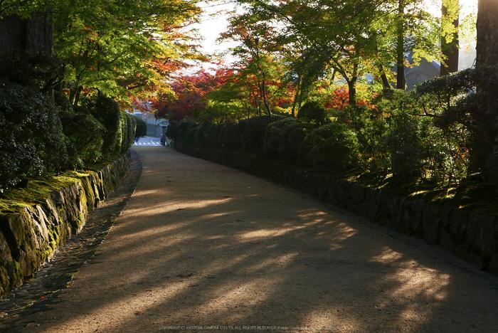 高野山,紅葉(P1000219,F5,34mm,LX100)2014yaotomi.jpg