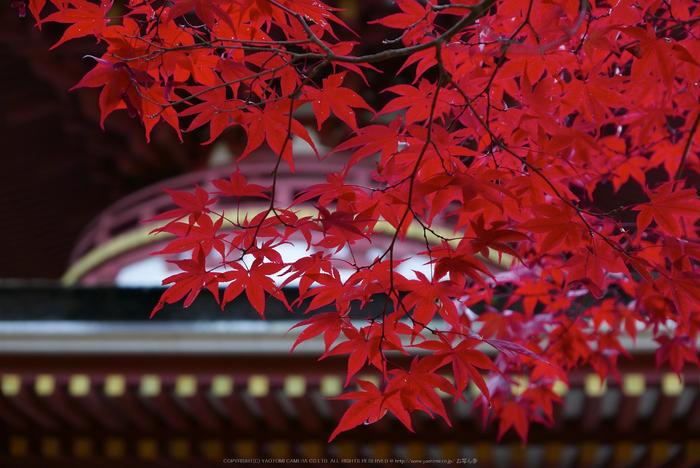 高野山,紅葉(P1000225,F2.8,32.6mm,LX100)2014yaotomi.jpg